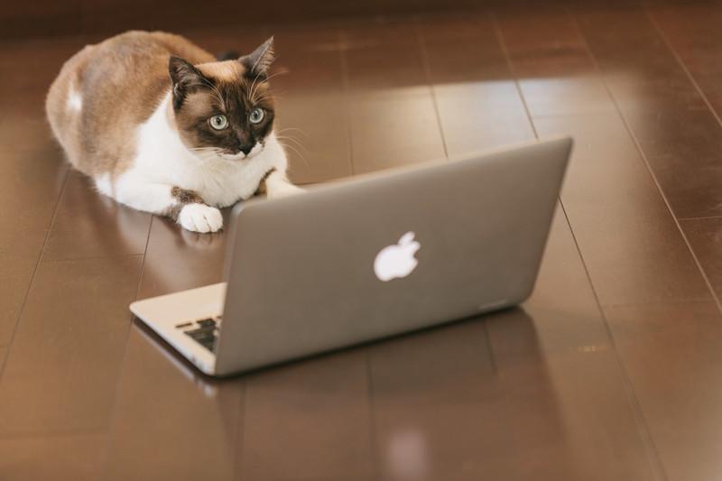 直木賞作家:村山由佳の飼い猫もみじの画像まとめ。有名小説も