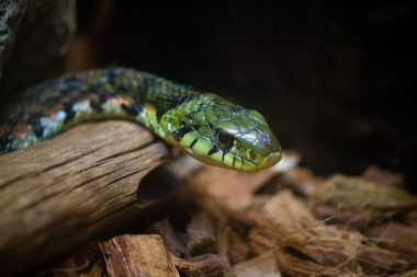 Twitterで話題!リアル過ぎるヘビ型ラジコンとは?動画や口コミをご紹介!