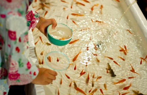 金魚すくいで大漁ゲット!ポイの表裏や厚さの違い、掬い方のコツを紹介
