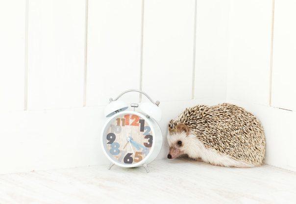 マツコの知らない世界:竹田浩一やおすすめ光目覚まし時計インティ4について紹介