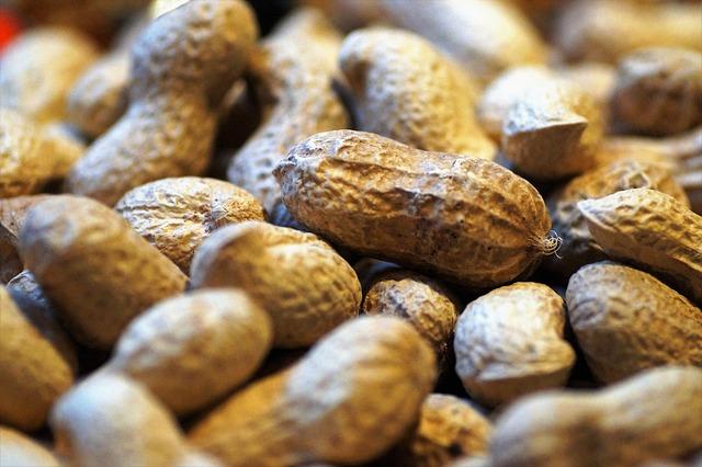 青空レストラン:千葉県産「ピーナッツ・キューナッツ」の通販・お取り寄せ方法紹介
